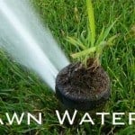 Lawn Watering: How Often? How Much?