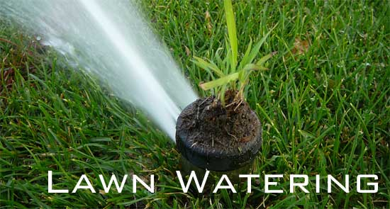 lawn watering how often? how much?, Natural flower