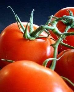 tomatoes-10043014