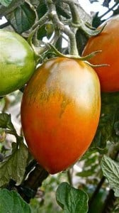 tomatoes-2-043014