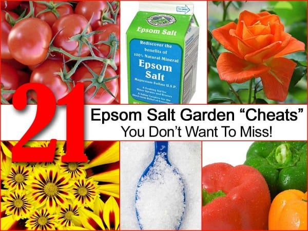 21 Epsom Salt Garden Cheats You Dont Want To Miss