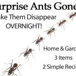 Surprise Ants Gone: Make Them Disappear Overnight!