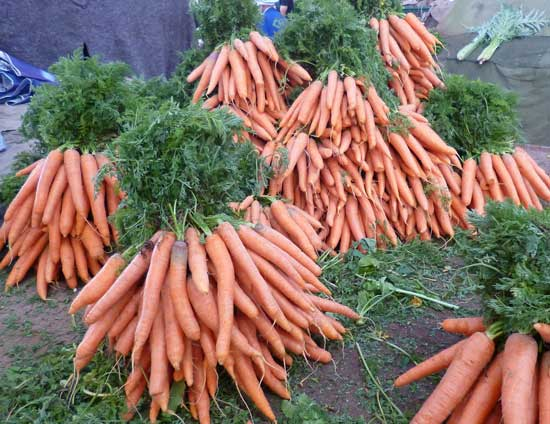 carrot-bunch-053114