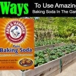 7 Ways To Use Amazing Baking Soda In The Garden