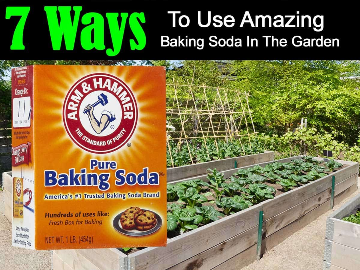 7 ways to use amazing baking soda in the garden. Black Bedroom Furniture Sets. Home Design Ideas