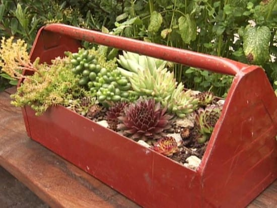 Create An Unusual Upcycled Container Garden