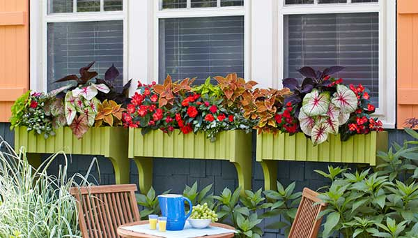 window-box-lowes-063014
