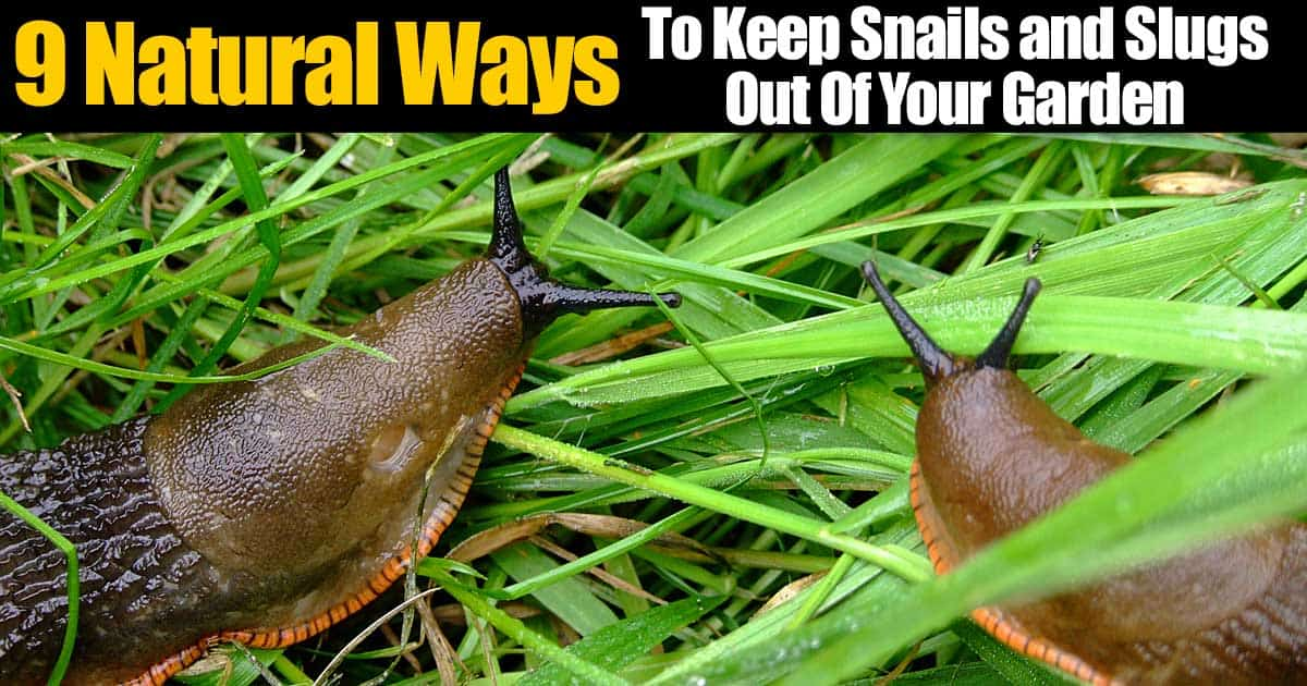 9 Natural Ways To Keep Snails And Slugs Out Of Your Garden
