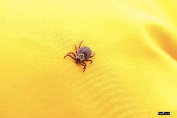Spider mite up close
