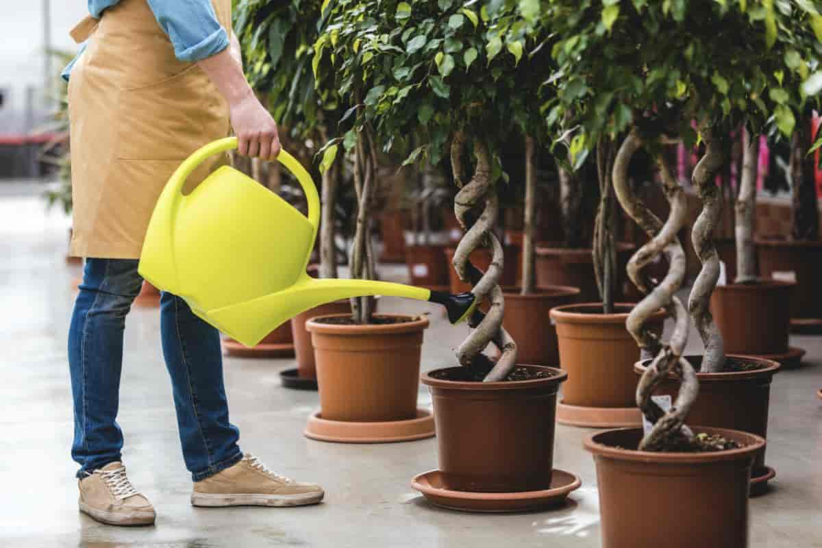 Man drenching potted plants with Neem Oil