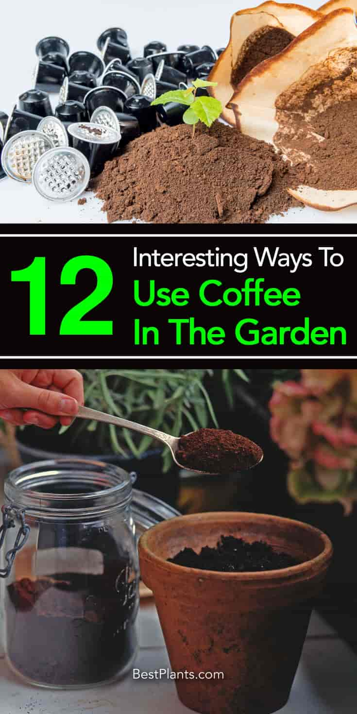 use for coffee in the garden