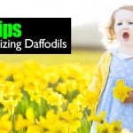 4 Tips For Naturalizing Daffodils