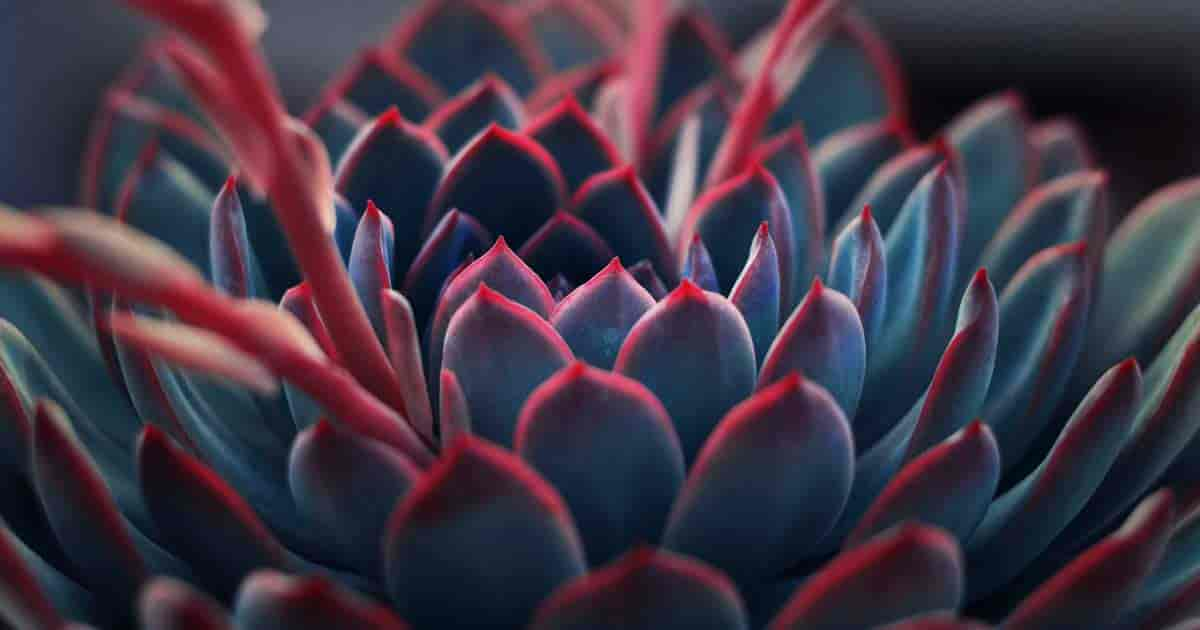 growing succulent plants and upclose look
