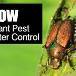 Know Your Plant Pest For Better Control