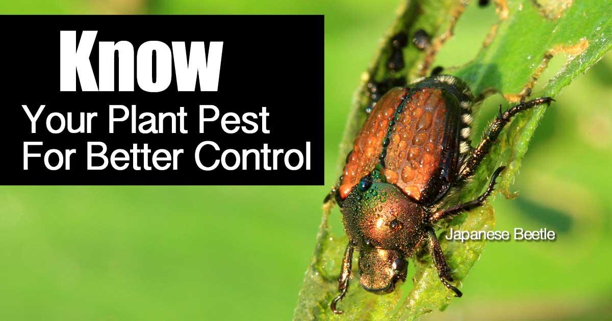 know-plant-pest-06302015