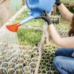 Transplanting fertilizer