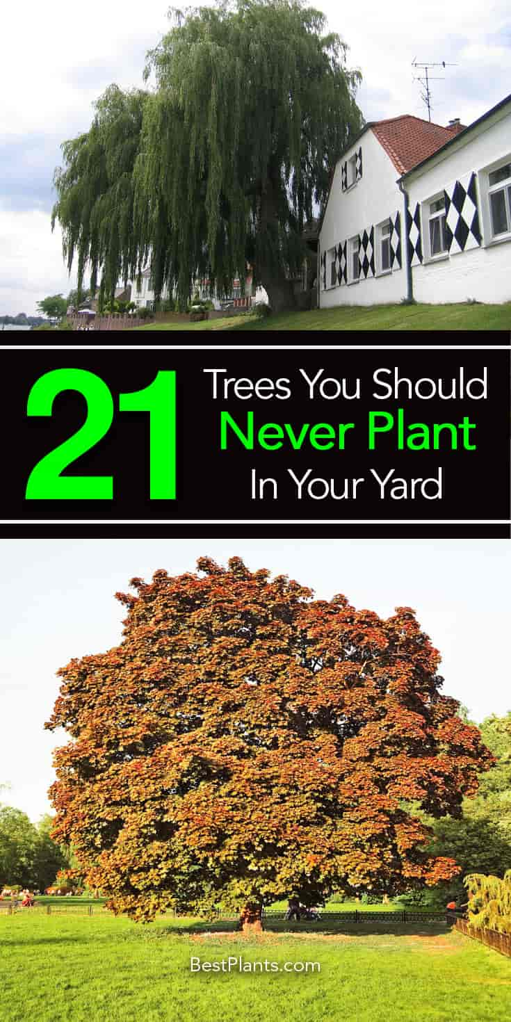 21 worse trees to plant near a house or in the yard